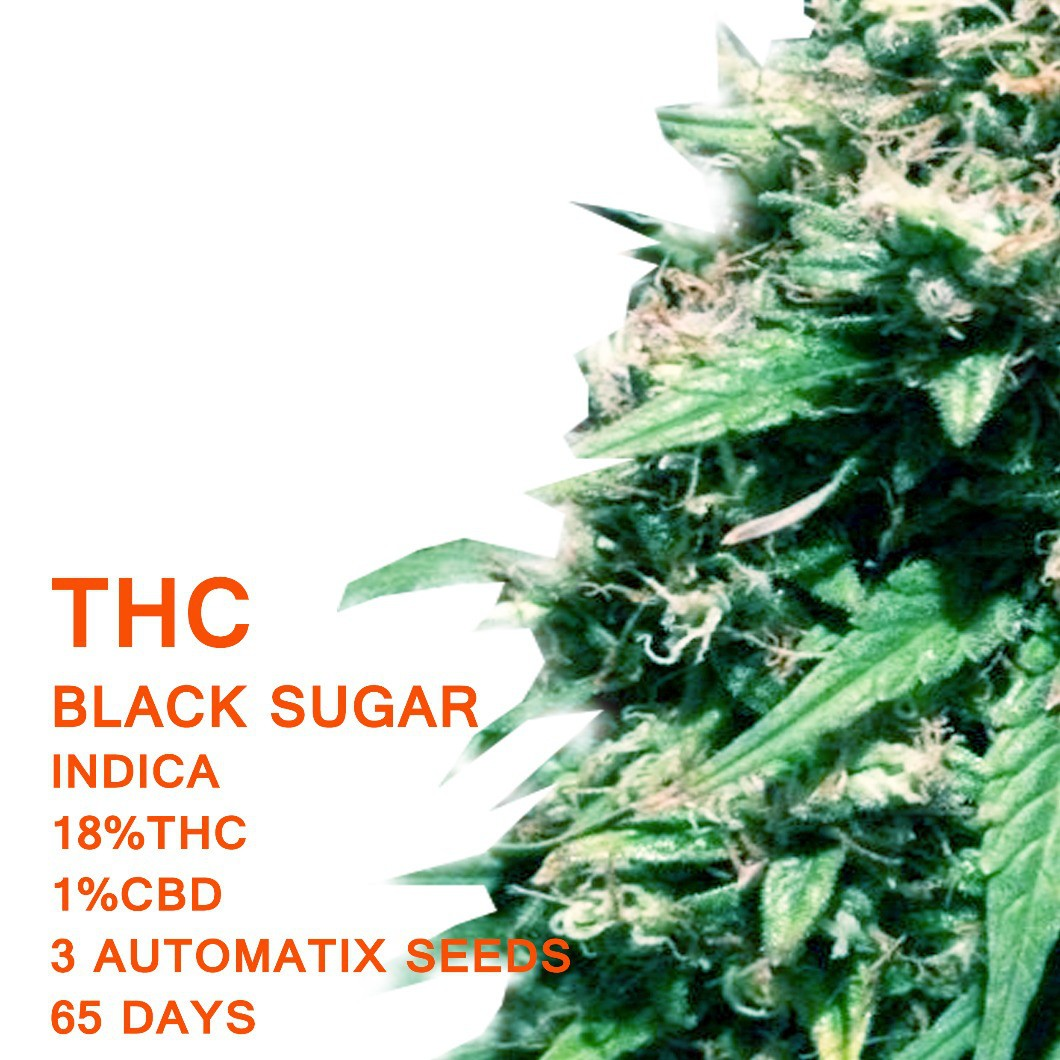 Black Sugar | SeedWorx Laboratories