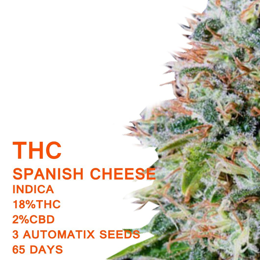 Spanish Cheese | SeedWorx Laboratories