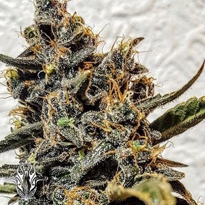 Strawberry Bubba Diesel | Holy Smoke Seeds - The Bobby Greenhash Foundation