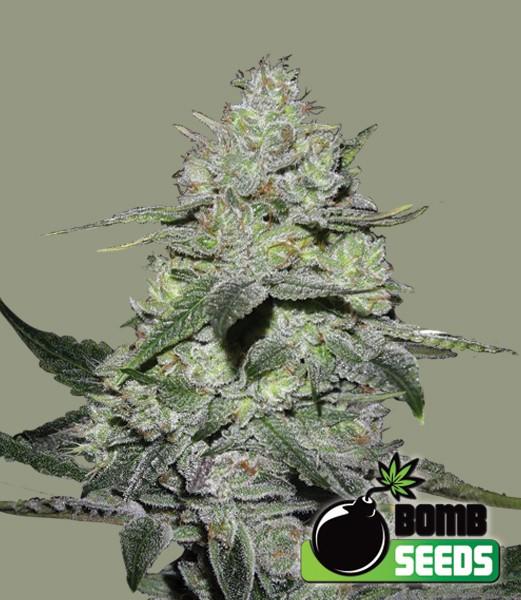 Gorilla Bomb | Bomb Seeds - Green Smoke Room