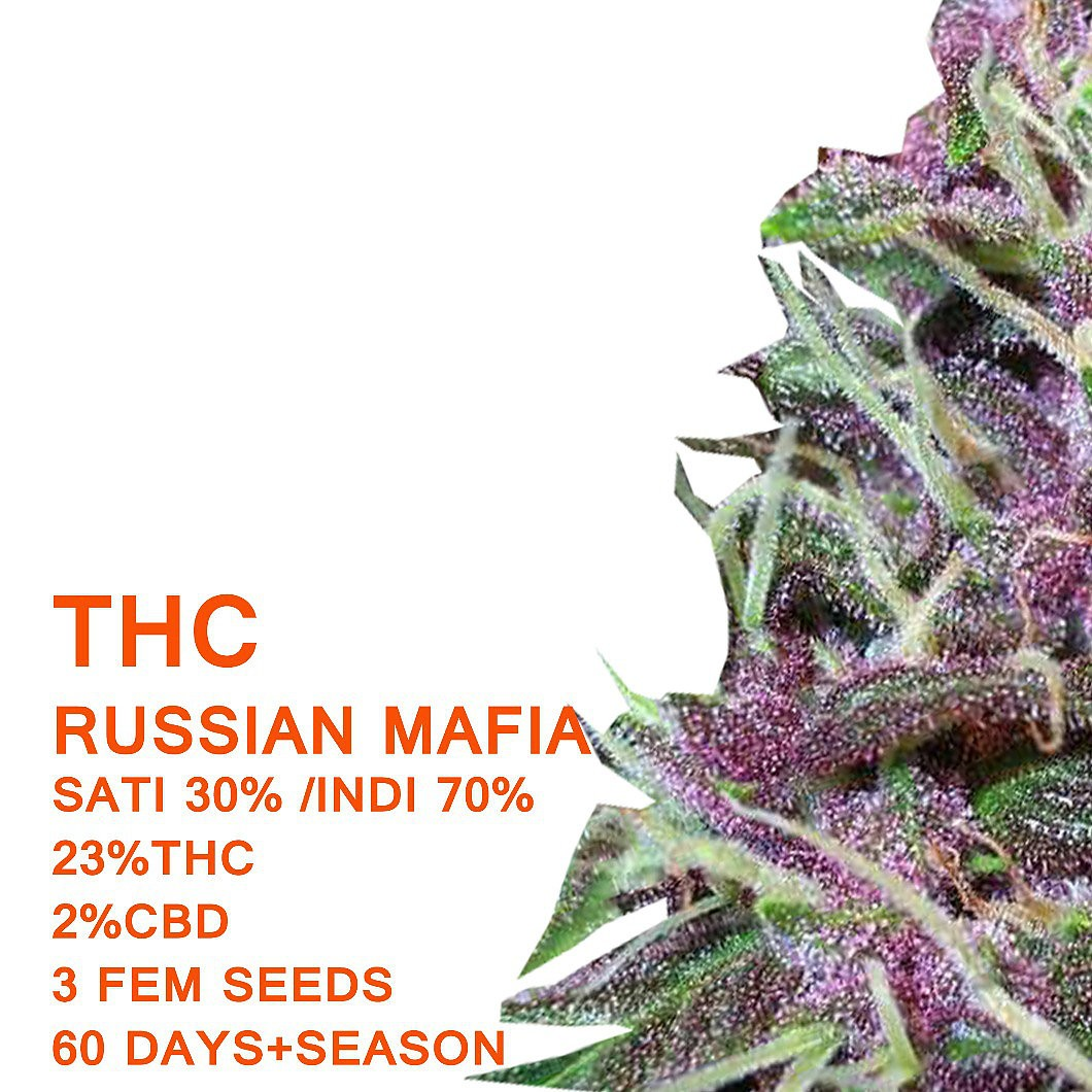 Russian Mafia - SeedWorx Laboratories