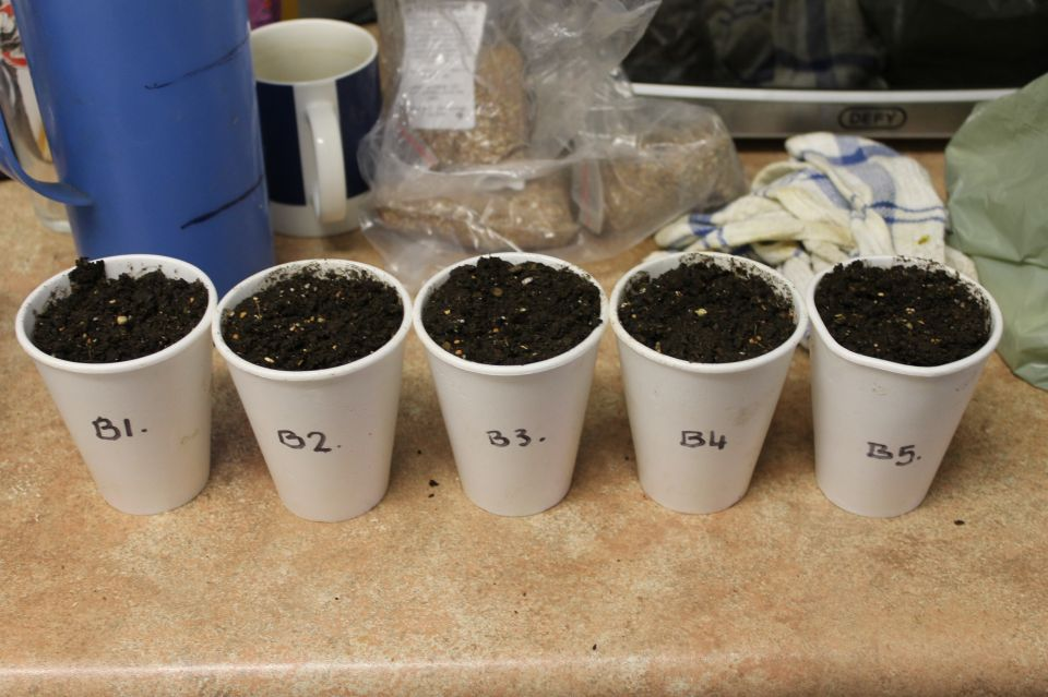 Good morning guys, so the 5 reg seeds are in soil almost a week now ( Sunday to be exact ) so just waiting on them to pop above the ground now...Have a wicked weekend folks, ladies and gents, boys and girls..